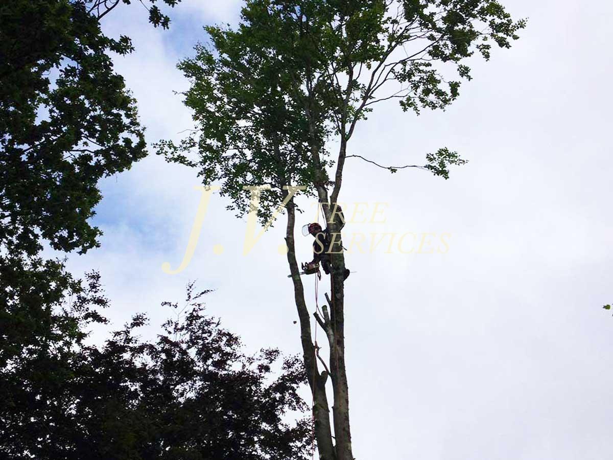 Tree Work Image