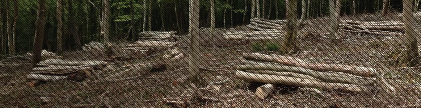 slider-tree-thinning